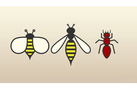 Insect Bites and Stings: Here's Help