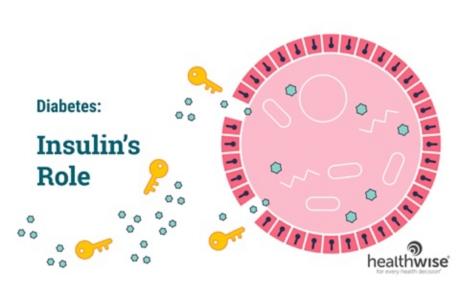 Diabetes: Insulin's Role